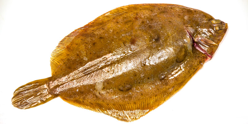 Todays 39 top tastey fish local lemon sole cod fillet for Sole fish fillet